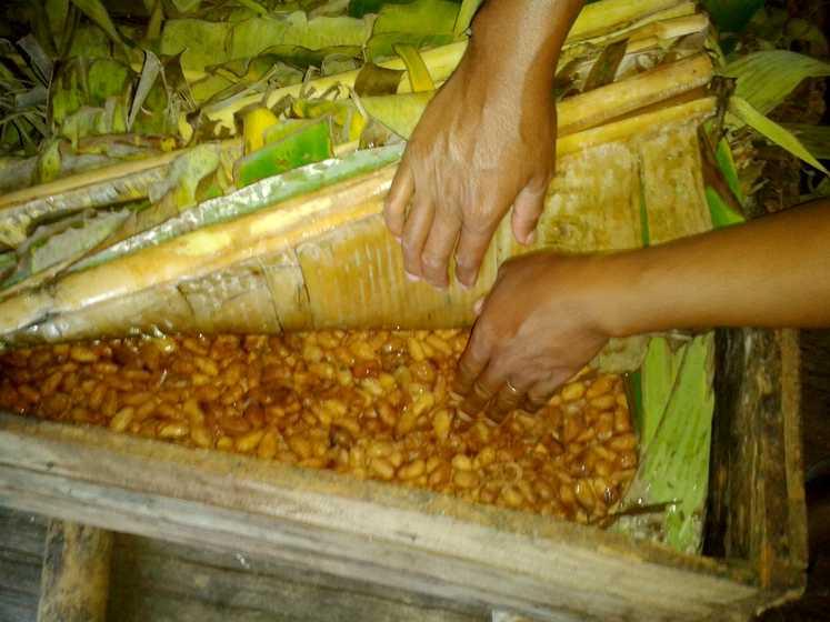 Fermentation de la fève de cacao