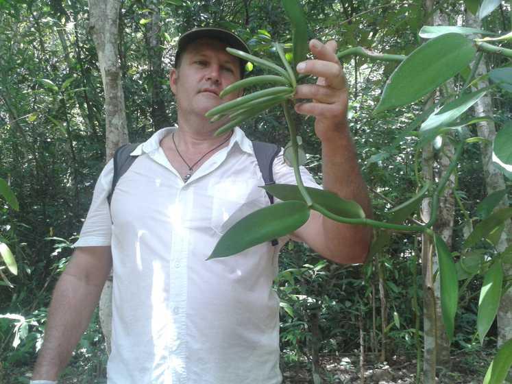 Exploration de la vanille fraiche